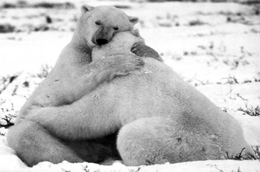 WITH BEAR HUGS,
