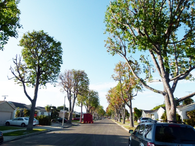 trees postcut 10.22.13