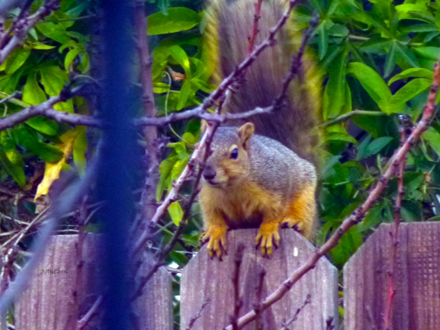 I was being watched as I filled the feeders. He was only about 5 feet from me, so he wasn't scared of me...