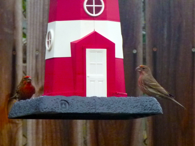 didn't take long for the birdies to come back and gobble up...  So far, no squirrels, they'll be back in the morning...